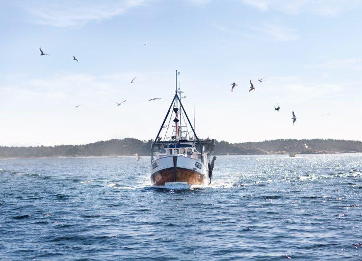 Fiskebåten på vei inn med de beste varene.
